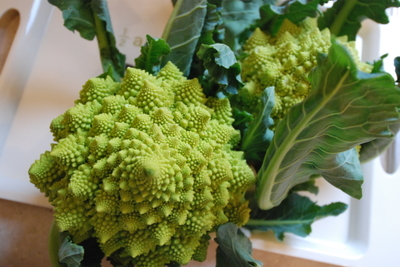 Jan08eatromanesquebroccoli